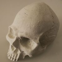SeaRock skull decorativa